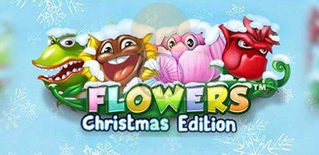Flowers Christmas