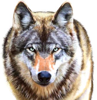 Slot con Animali online